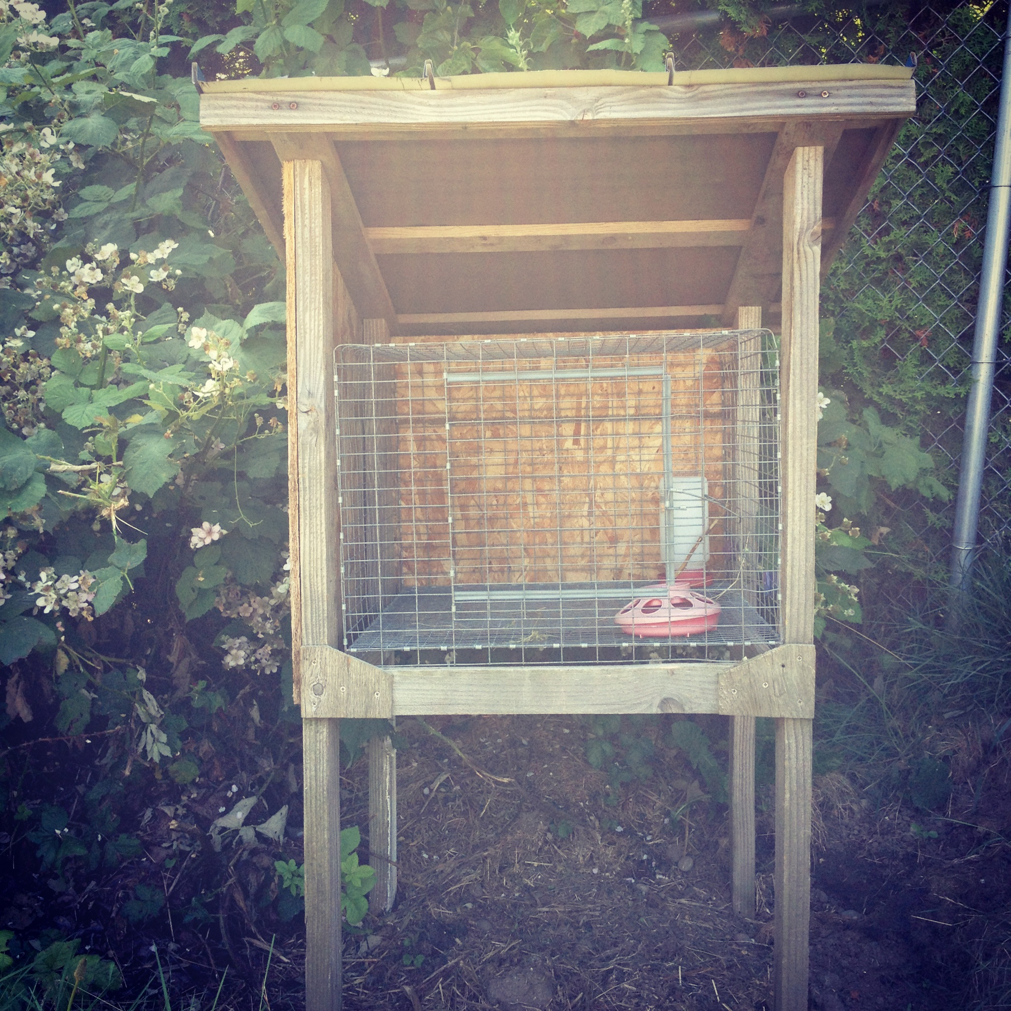 coturnix quail god home u0026 chickens